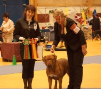 Dogue de Bordeaux hvalpe Dogue de Bordeaux dogger DKK stamtavle